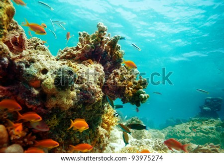 Lagoon panorama with fish school and corals - stock photo