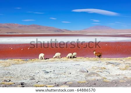 Laguna Colorado, Altiplano, Bolivia, South America - stock photo