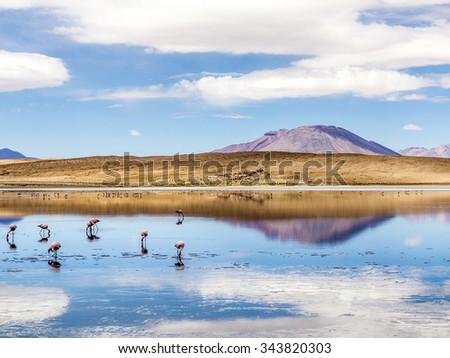 Laguna Kara salt lake with reflection of the mountain, Eduardo Avaroa Andean Fauna National Reserve, Bolivia - stock photo