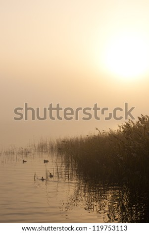 Lake and duck in fog - stock photo