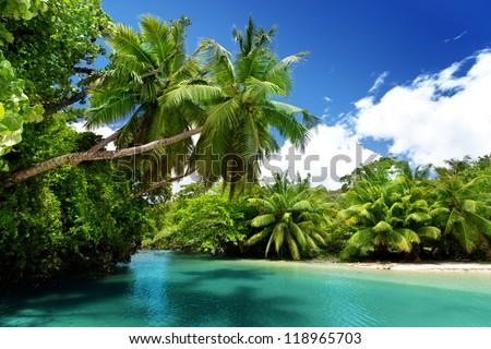 lake and palms, Mahe island, Seychelles - stock photo