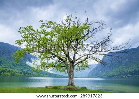 Lake Bohinj, Slovenia in spring - stock photo