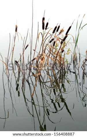 lake in mist - stems of reeds reflected in water - stock photo