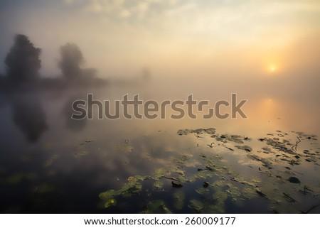 Lake with the fog at sunrise. The Ukraine - stock photo