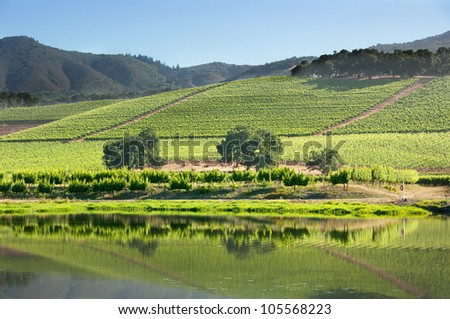 Lakeside Reflection of Mountain Vineyard - stock photo