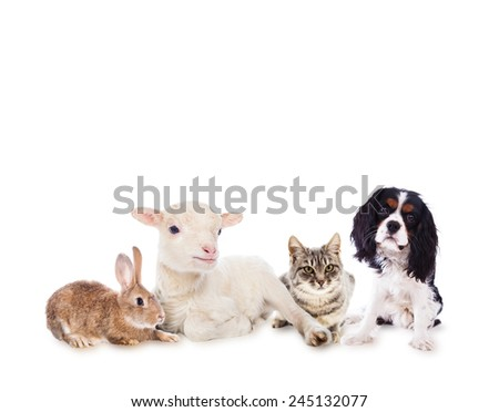 Lamb, cat, dog and rabbit - stock photo