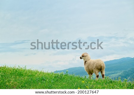 Lamb grazing on the picturesque landscape - stock photo