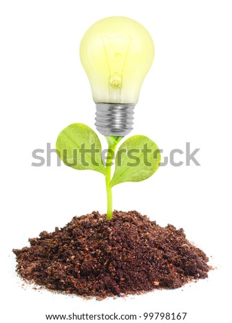 Lamp bulb groving in a soil. New idea concept. Business metaphor. - stock photo