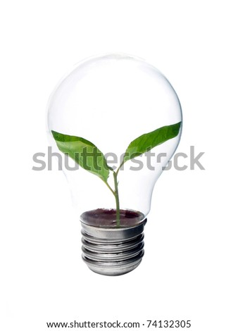 Lamp bulb with green plant inside isolated - stock photo
