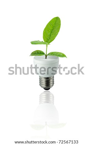 lamp green leaf on white background - stock photo