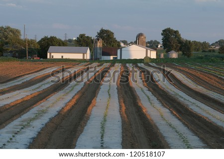 Lancaster Coutny,Pa farmland - stock photo