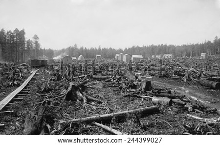Land littered with the stumps of trees in what would become the lumber town of Davis, West Virginia. Called a 'stump town' in its early years, it thrived as a lumber center from 1885-1925. - stock photo