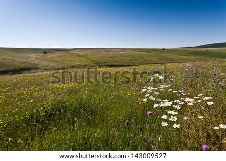 Landscape 3 - stock photo