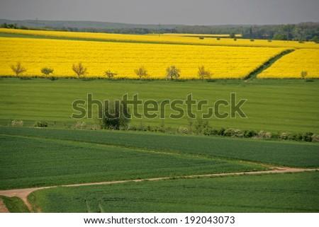 landscape - agriculture - stock photo