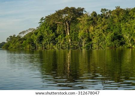 Landscape amazon rain forest - stock photo