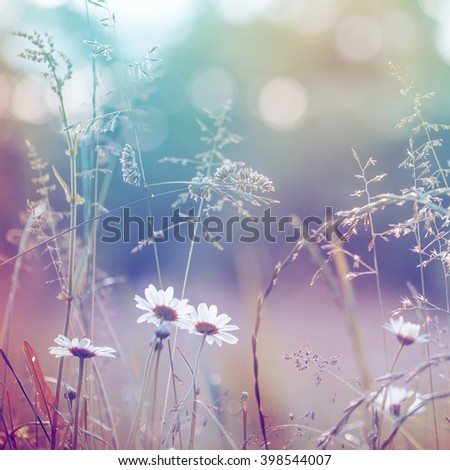 Landscape background beautiful field flowers in summertime or springtime/ selevtive focus - stock photo