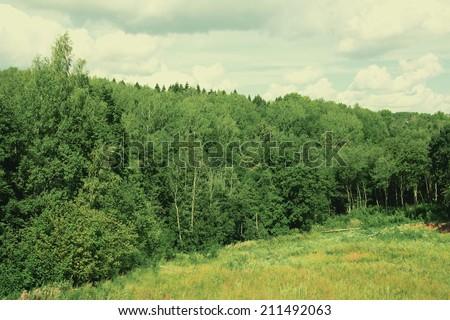 Landscape dense forest - stock photo
