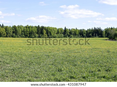 Landscape field with green grass, yellow dandelions and forest in the distance - stock photo