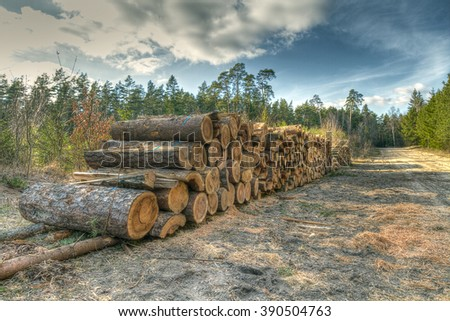 Landscape - forest in spring time - North - Eastern part of Poland (Knyszynska Forest), primary forest. A trees logging , felling of trees , the lumber industry - stock photo