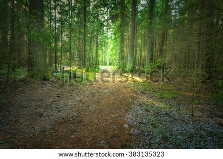 Landscape - forest in winter time - North - Eastern part of Poland (Knyszynska Forest), primary forest - stock photo
