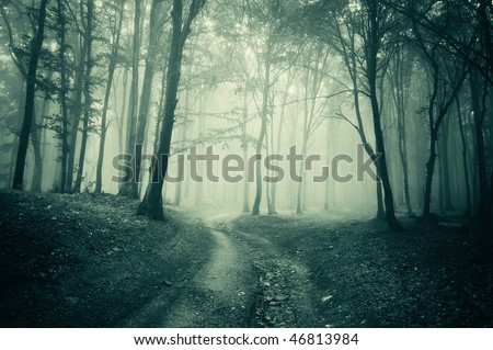 landscape from a dark forest with fog - stock photo