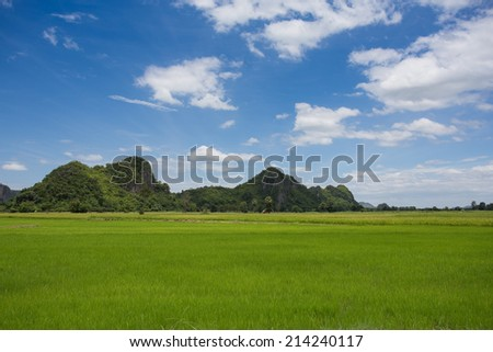 landscape grass of Rice meadow with cloud and blue sky - stock photo