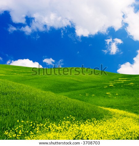 Landscape : Green field with yellow flowers, blue sky and big white fluffy clouds. Tuscany, Italy - stock photo