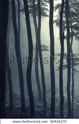 landscape in forest - stock photo