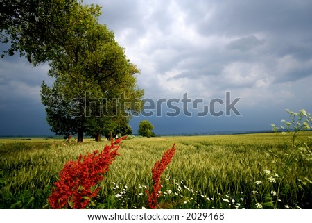 Landscape in hungary - stock photo