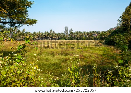 Landscape in India. Field and palm. - stock photo