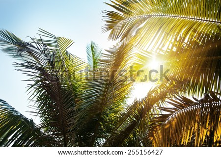 Landscape in India. Palm and sun. - stock photo
