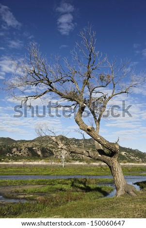 landscape in the northeast of china - stock photo