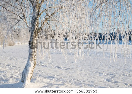 Landscape in winter and tree branches covered with white  frost - stock photo