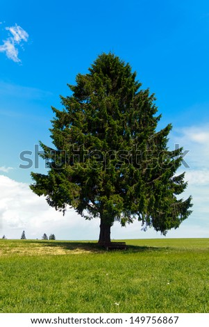 Landscape - lonely pine tree on green field, park bench - stock photo