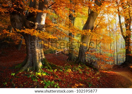 Landscape Nice fantasy Forest with creek in a golden Autumn. Wall-Poster Idea. - stock photo