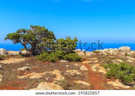Landscape of Akamas Peninsula National Park, Cyprus - stock photo
