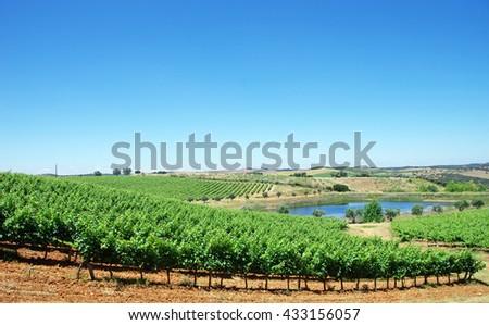 landscape of Alentejo vineyards - stock photo