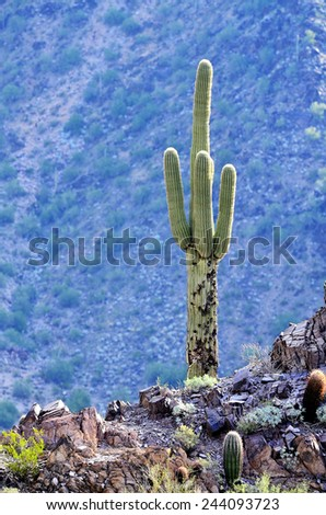 Landscape of Arizona desert with cactus and mountains - stock photo