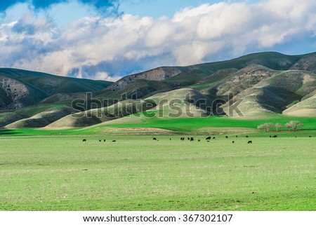 Landscape of central California countryside with green hills, cloudy skies and cows in a pasture. - stock photo