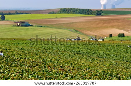 landscape of Champagne during the harvest with fireplaces a background in nuclear plant - stock photo