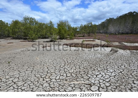 Landscape of dry earth in Coombabah Lake Conservation Park in Gold Coast Queensland, Australia - stock photo