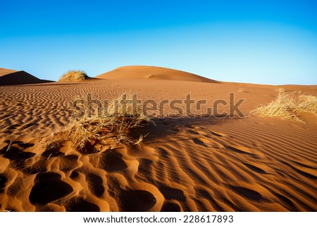 Landscape of dunes in sossusvlei with wind shapes the sand dunes, Namibia, sunrise scene - stock photo