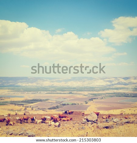 Landscape of Galilee Mountains with Herb of Cows on the Pasture, Israel, Instagram Effect - stock photo