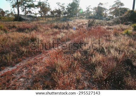 Landscape of grass field in larch forest on top of high mountain. - stock photo