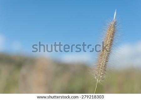 Landscape of hameln meadow  - stock photo