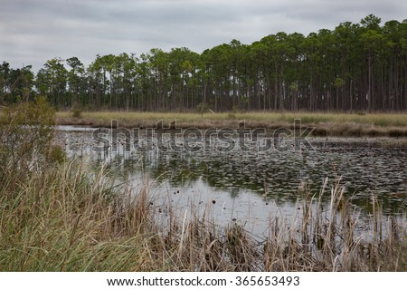 Landscape of Louisiana southern pine marsh layers - water, trees and grasses - stock photo
