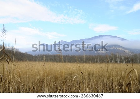 landscape of Moors and marsh of Marais de Lavours, in Savoy, France - stock photo