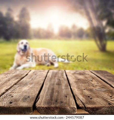 landscape of park and dog with brown top of free space for your dog food  - stock photo