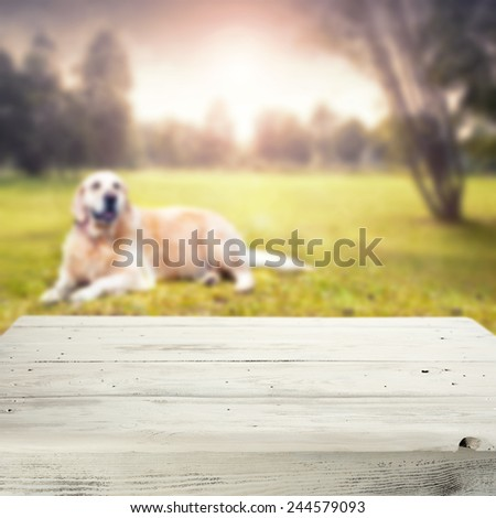 landscape of park and dog with white table top of  free space for your dog food  - stock photo