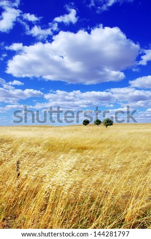Landscape of portuguese plain, alentejo region - stock photo
